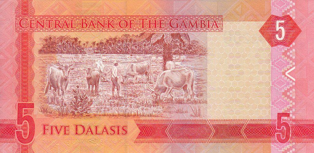 Gambie 5 Dalasis Dr J. J. Jammeh - Agriculteur avec des vaches - 2015