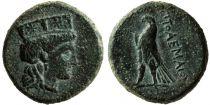 Grèce (Egypte) Bronze, Ptolémée I Soter (-323-283), Chypre (-310-306)